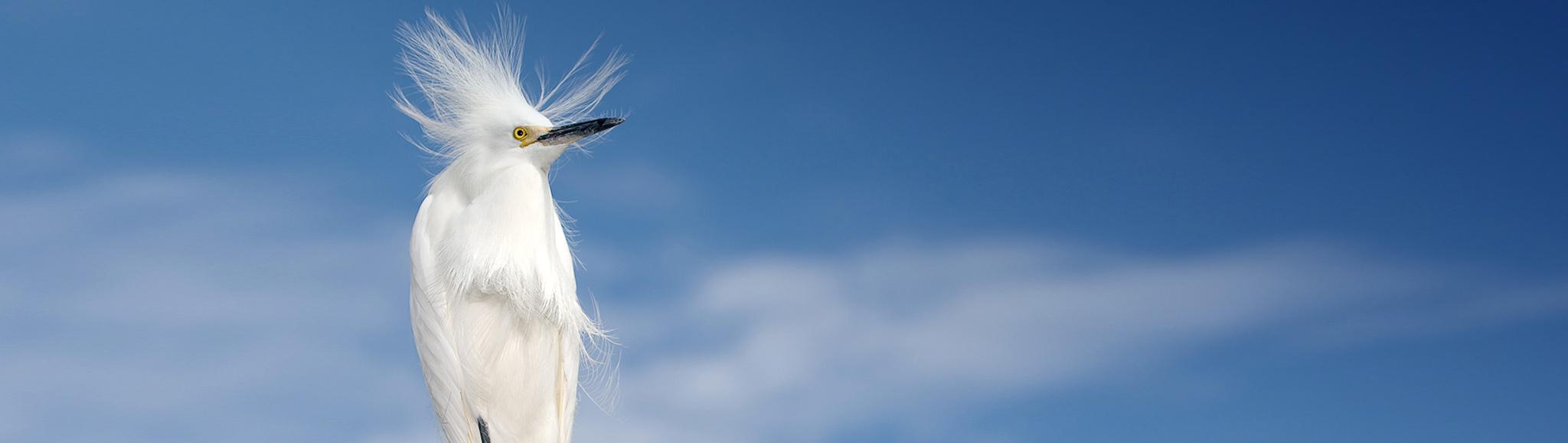 slider-egret